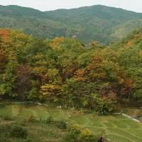 里山の紅葉(栃木県那珂川町)
