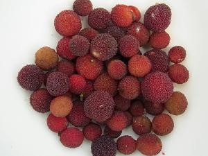 ヤマモモ'瑞光'の果実