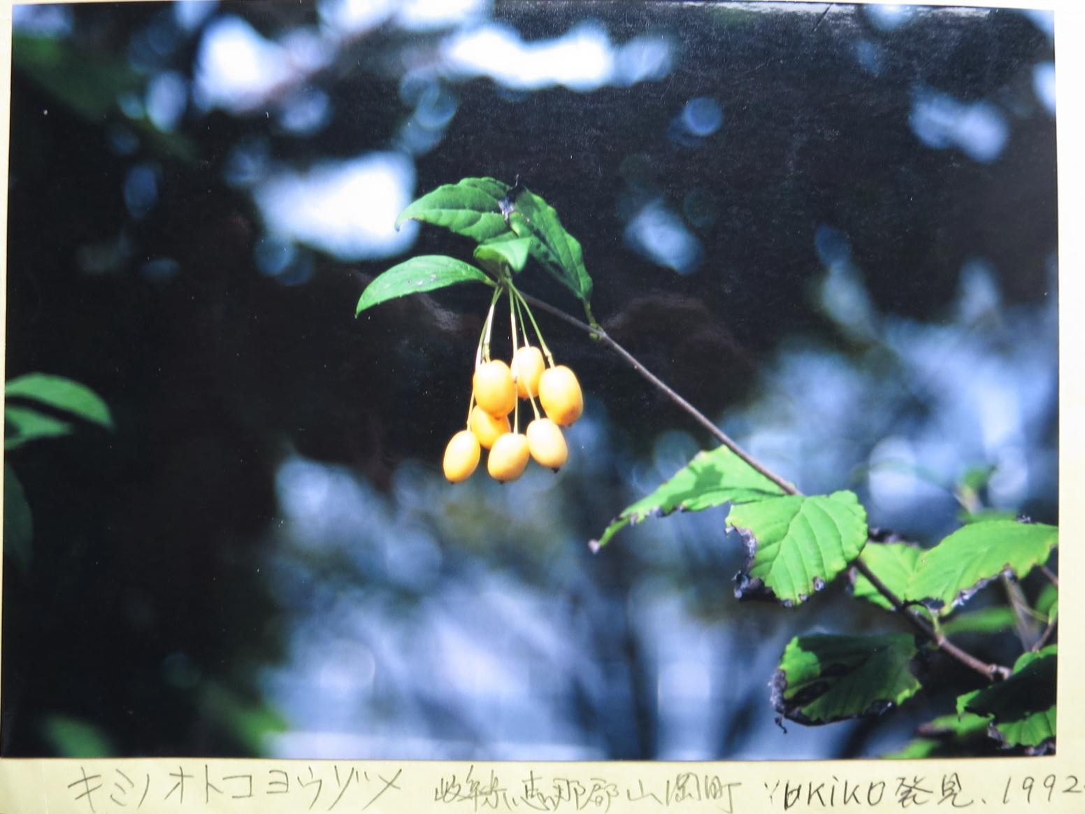 キミノオトコヨウゾメ