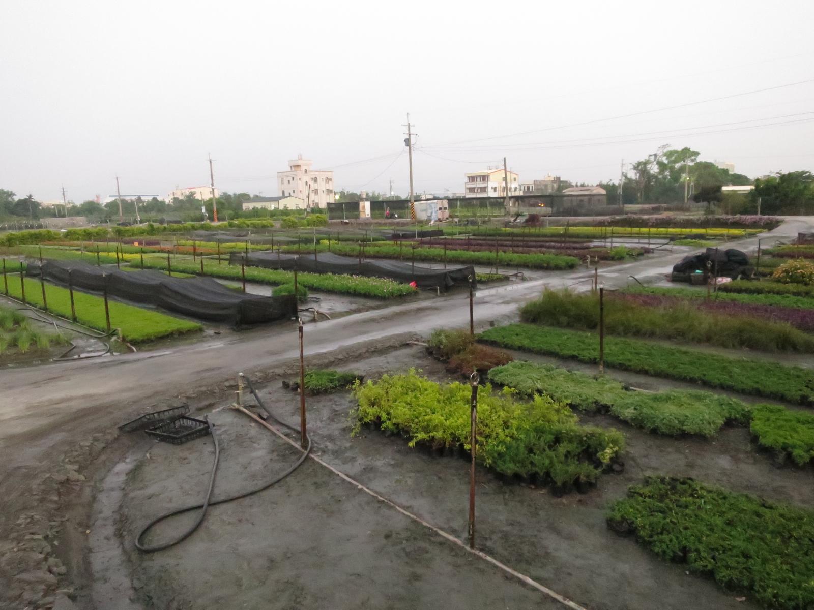 台湾・田尾郷生産圃場
