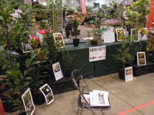 砧花き展示商談会