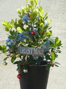 オウゴンホリーのクリスマス・デコレーション
