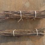 穂木の貯蔵